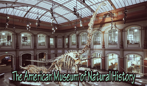 the-american-museum-of-natural-history