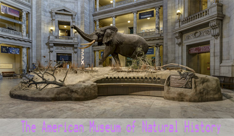 the-american-museum-of-natural-history2